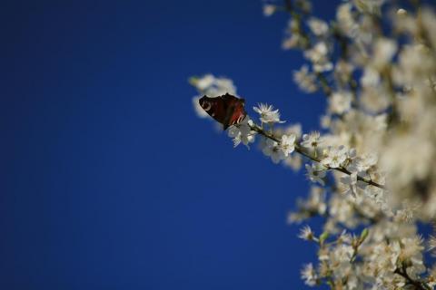 V.I.P.-Platz für Schmetterlinge