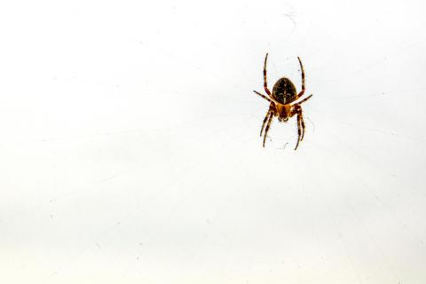 Spinnen im Netz
