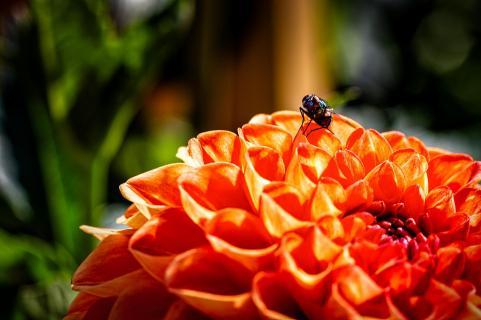 Fliege im Glück