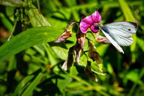 Anziehende Orchidee