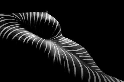 zebra edition