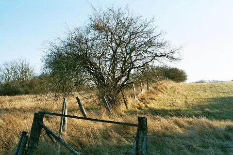 Zaun in der Uckermark_imm007 N195