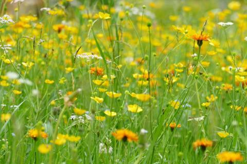 Blumenwiese Siebenbrunnen