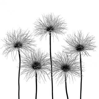 Garten-Quintett