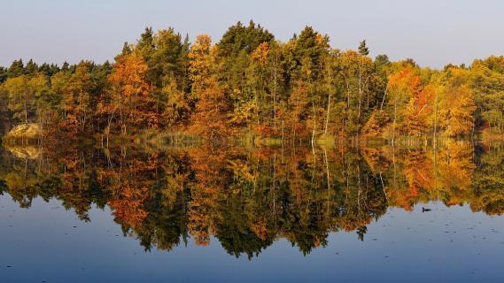 Herbst in Vogelsang