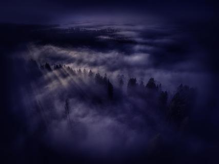 Nächtlicher Nebelwald im Mondlicht