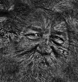 Fabelwesen-Portrait