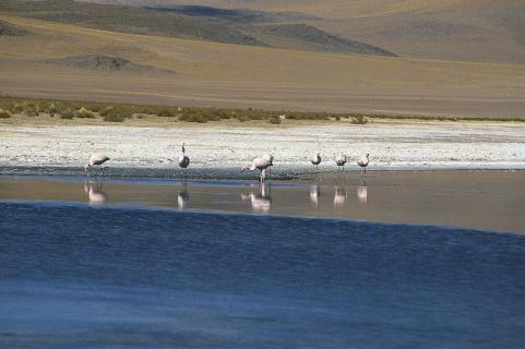 Flamingos, Salar, Bolivien
