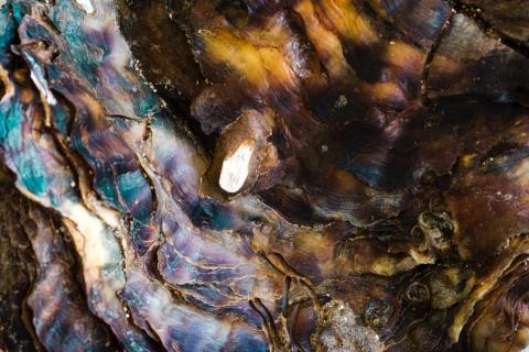 Makroaufnahme einer Muschel