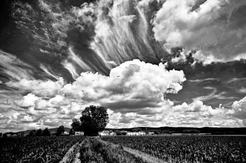 Wolken über Feld