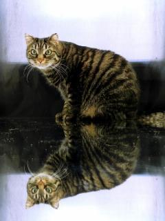 #12: Fotografieren Sie ein Haustier_michael_b