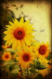 kleine Sonnen