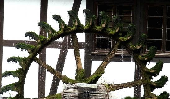 altes Wasserrad am Blautopf