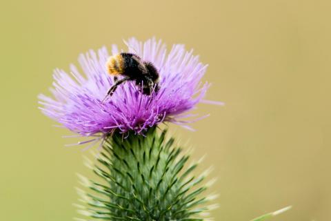 Bienen Köpper
