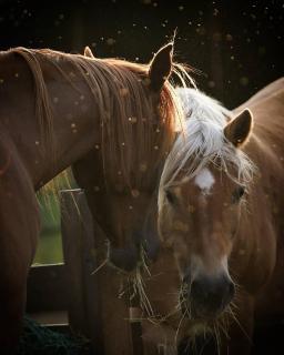 Pferde beim Essen