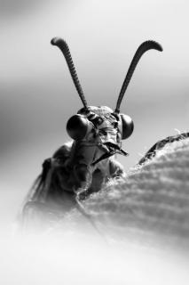 Libellenportrait