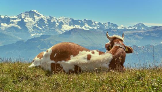 Viehisch gute Aussicht
