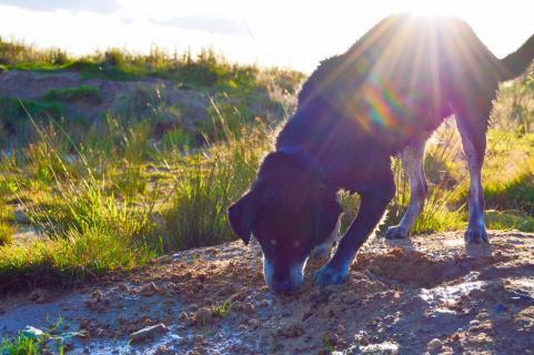 Hund im Sonnenschein