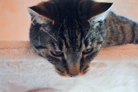 Katze im Portrait
