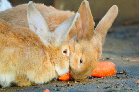 Kaninchen beim