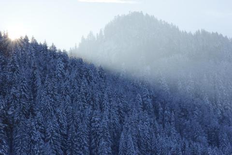 Winterfarbenlicht