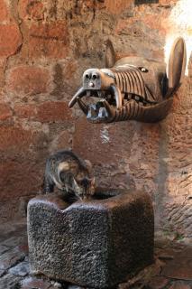 Eber und Katze