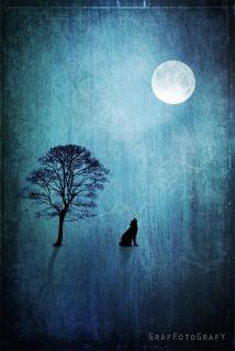 Wolf heult Mond an