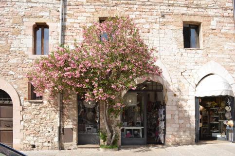 Altstadt von Assisi
