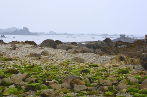 Grüne Steine - Sept Îles - Bretagne