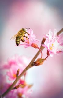 Pollenjäger