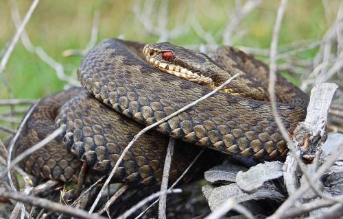 it ' s adder time