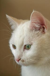 Portrait einer Hauskatze, Version 2
