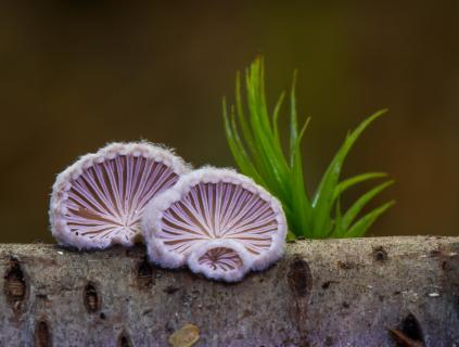 winzige Pilze