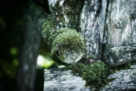 Waldspaziergang Fundstücke