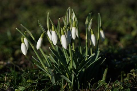 07 Fangen sie den Frühling ein_Alfred_Hausner