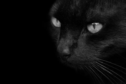 black devil