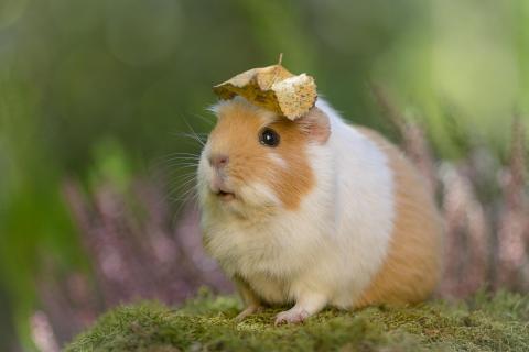 Kopfbedeckung ;)