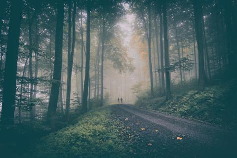 Aufgabe 39 Herbst und Nebel Maik Wennemer