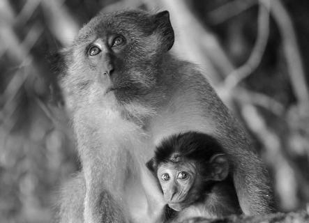 Insel-Affen - der Blick