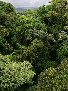 Dschungel in Grüntönen