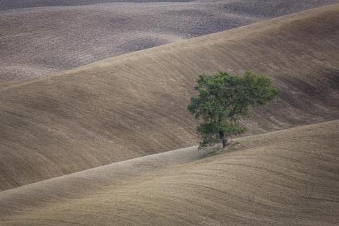 Toscanawellen