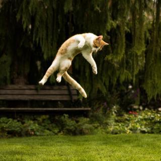 Katze im Flug