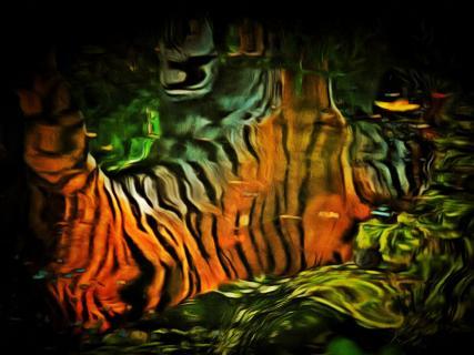 Tiger Spiegelung