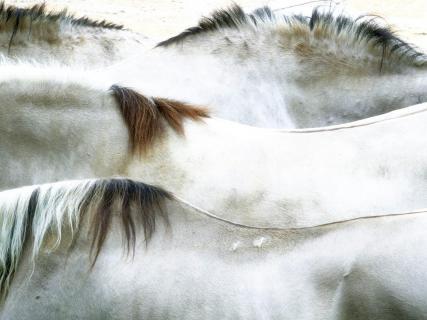 Horse Landscape - Pferdelandschaft