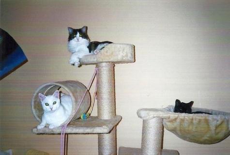 Miko, Milli und Mümmi