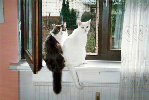 Milli und Miko