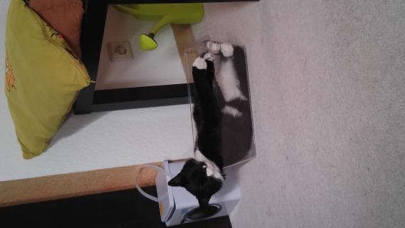 Murphy in the Box