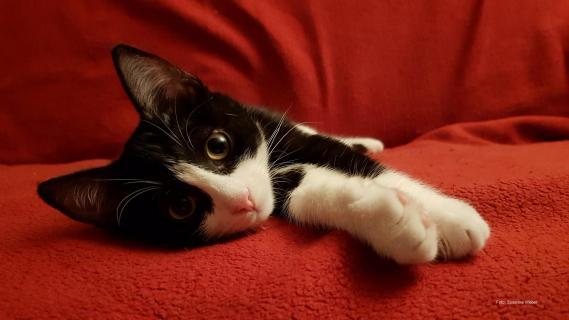 Kätzchen Uschi auf dem Sofa