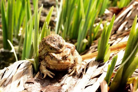 Aus der Sicht eines Frosch.