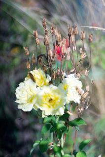 Vergangenes und gelbe Rosen!
